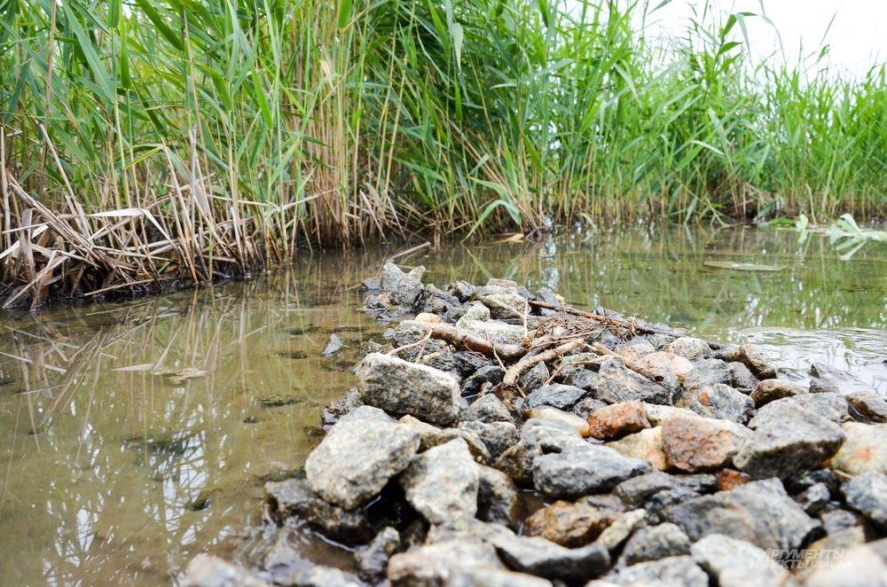 «На это потребуется около 7-10 лет очистки, 500-700 геотуб длиной 50 метров и диаметром 3-4 метра».