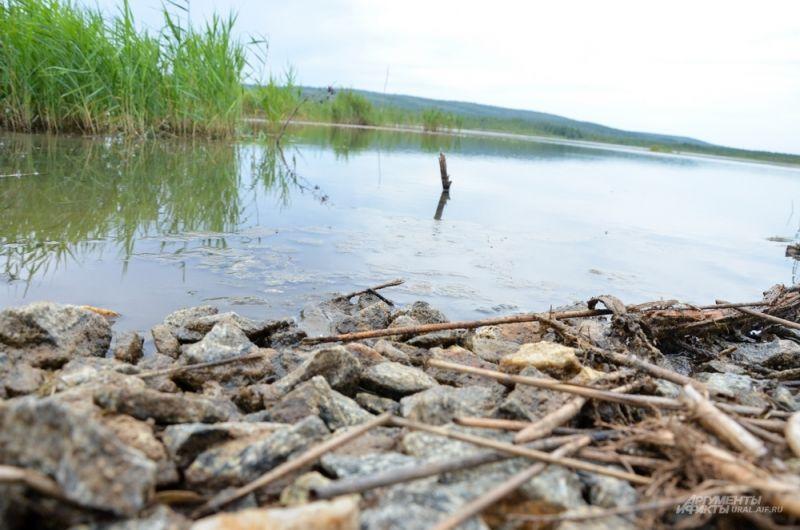 Работы по очистке как озера Здохня, так и Верх-Исетского пруда будут проводиться одновременно.