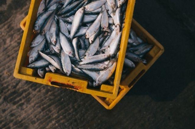 В Тюменской области за полгода вырастили 1 тысячу 404 тонны рыбы