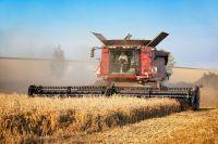 В Тюменской области ведется уборка зернобобовых и зерновых культур
