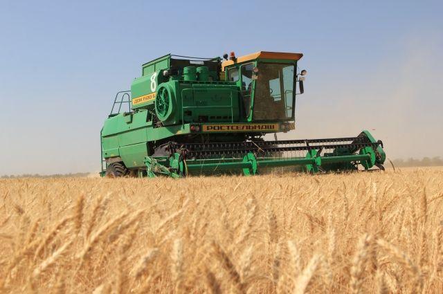 Больше трёх месяцев в почву не попало ни капли влаги. Засуха могла совсем лишить селян хлеба. Но грамотные аграрии собрали достойный урожай.