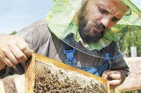 Мёда будет достаточно, чтобы обеспечить весь край и соседние регионы.