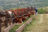 Личным подсобным хозяйствам Ставрополья должна помочь кооперация.
