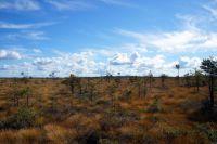 В Тазовской тундре ищут пропавшего подростка уже восемь дней
