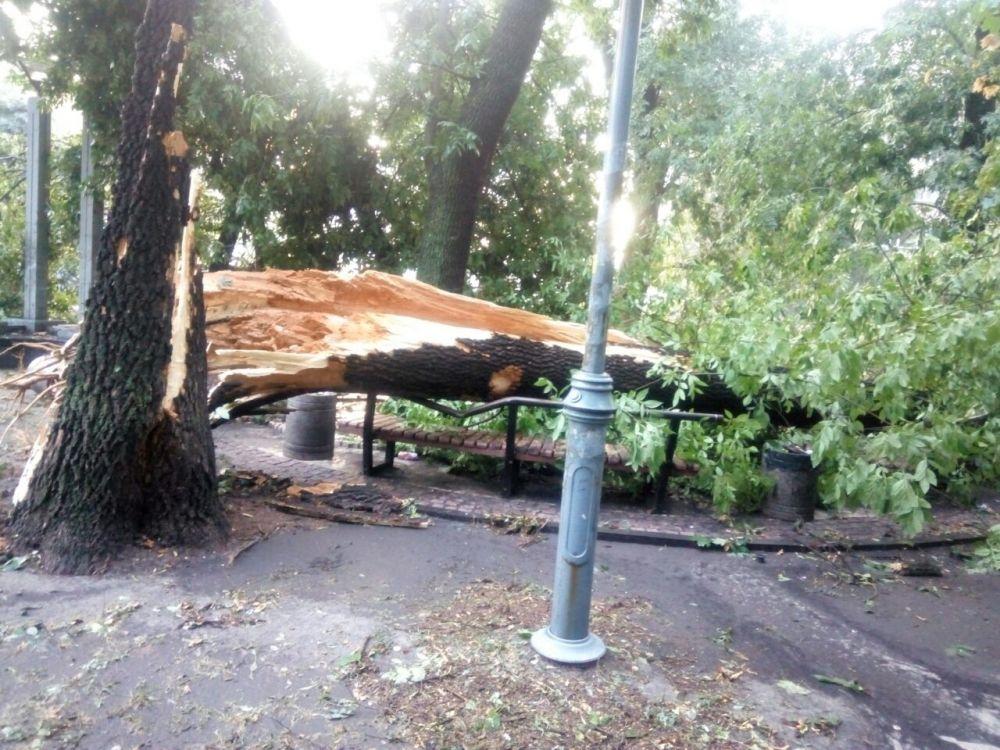 Упавшее дерево на Шулявке. Таких деревьев было десятки по столице, некоторые из них упали проезжую часть или на автомобили.