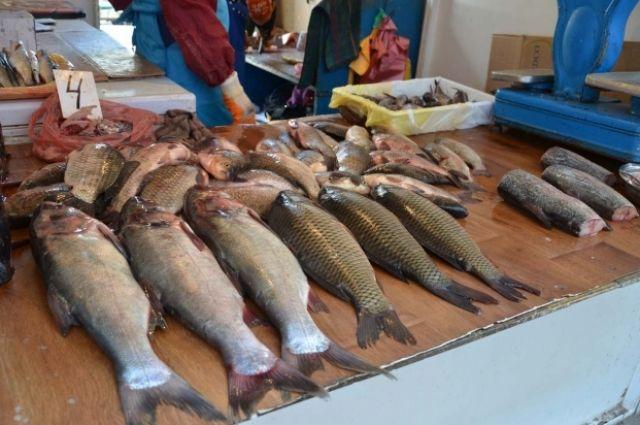 Опасный улов. Почему в Украине продают рыбу сомнительного качества?