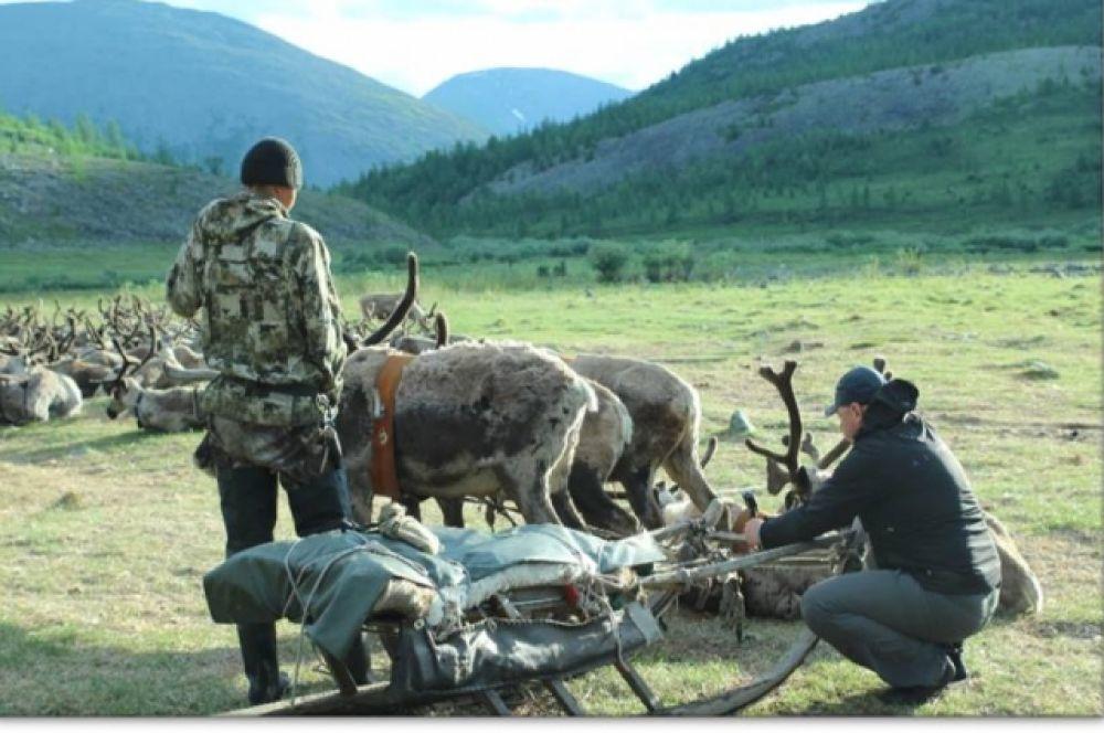 За оленями нужен глаз да глаз. Ведь в предгорье Урала нередко встречаются хищники: волки и медведи.