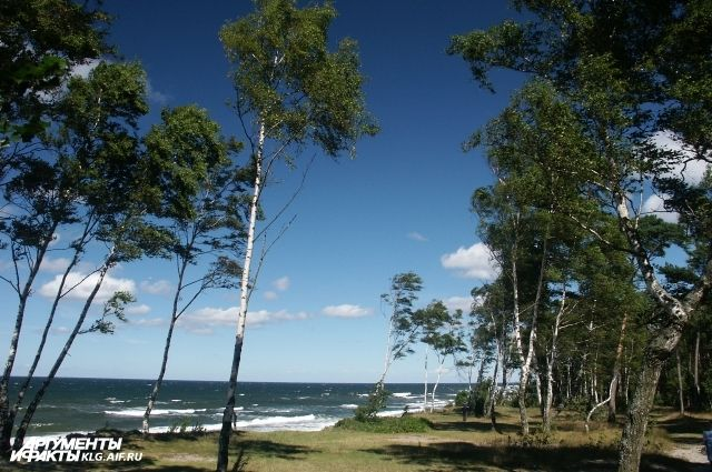 Власти Зеленоградска предложили создать в Куликово платную зону отдыха.