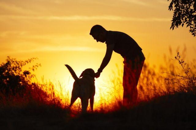 18 августа: предпразднство Преображения Господня, день бездомных животных