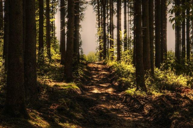 Несколько дней женщина и её дочка провели в лесу.