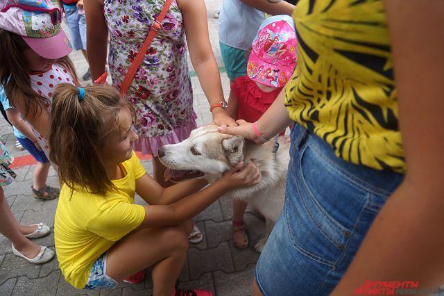 Гостей праздника ждут знакомство с породами собак, ярмарка интересных вещиц, куча шариков и мастер-класс по пиксель-арту.