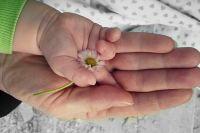 Тюменцы предлагают сэкономить на букетах и спасти жизнь ребенку