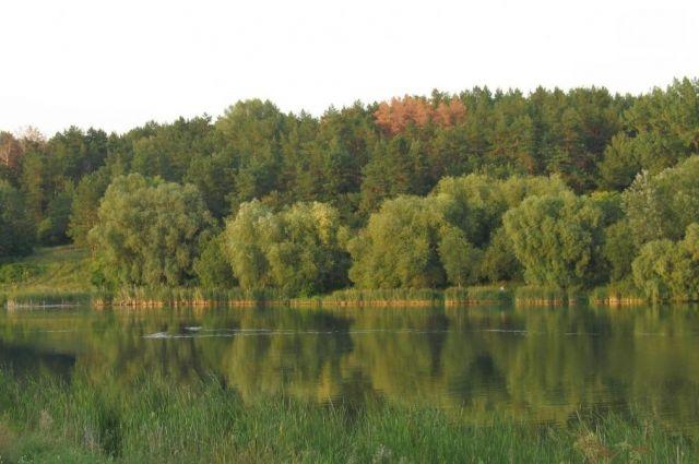 Из-за смены климата в Украине могут вымереть все леса