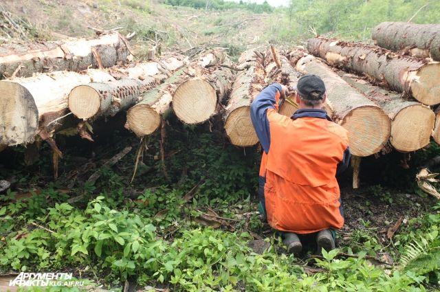 Калининградскую компанию оштрафовали на 10 млн рублей за незаконную вырубку.