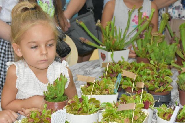 Хищные растения, разводящиеся в домашних условиях, не опасны для человека.