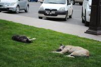 В районе улицы Велижанской обитает стая злых собак