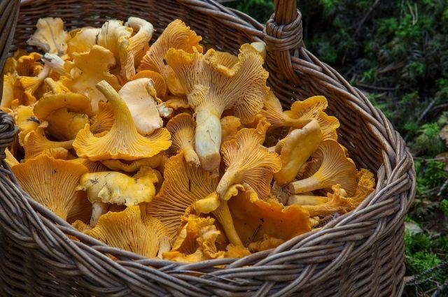Опасайтесь грибов! Как не отравиться, что делать при отравлении грибами?