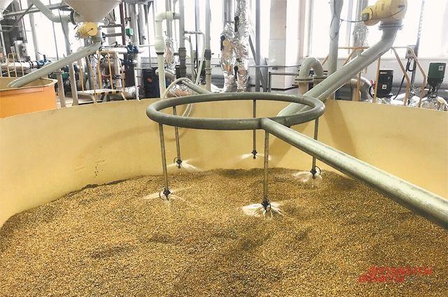 Перед взращиванием солод, полученный из ячменя, нужно хорошо увлажнить.