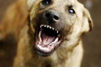 В Киевской области на женщину возле подъезда искусала свора собак