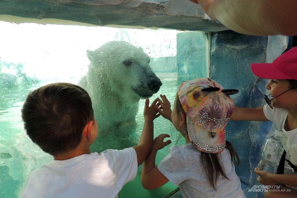 Дети белого медведя не боятся.