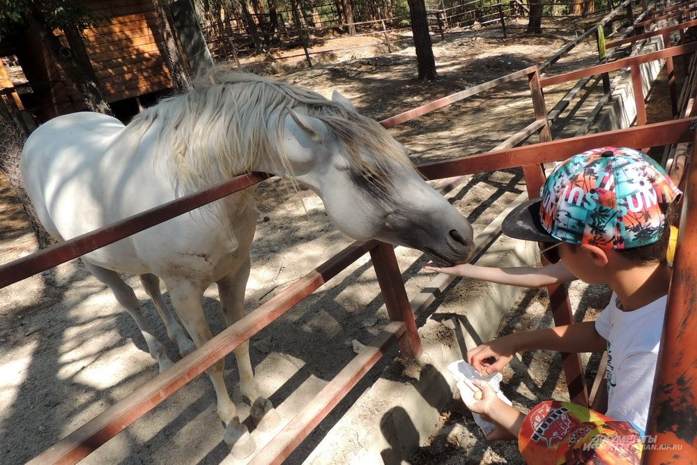 Дети кормят лошадь.