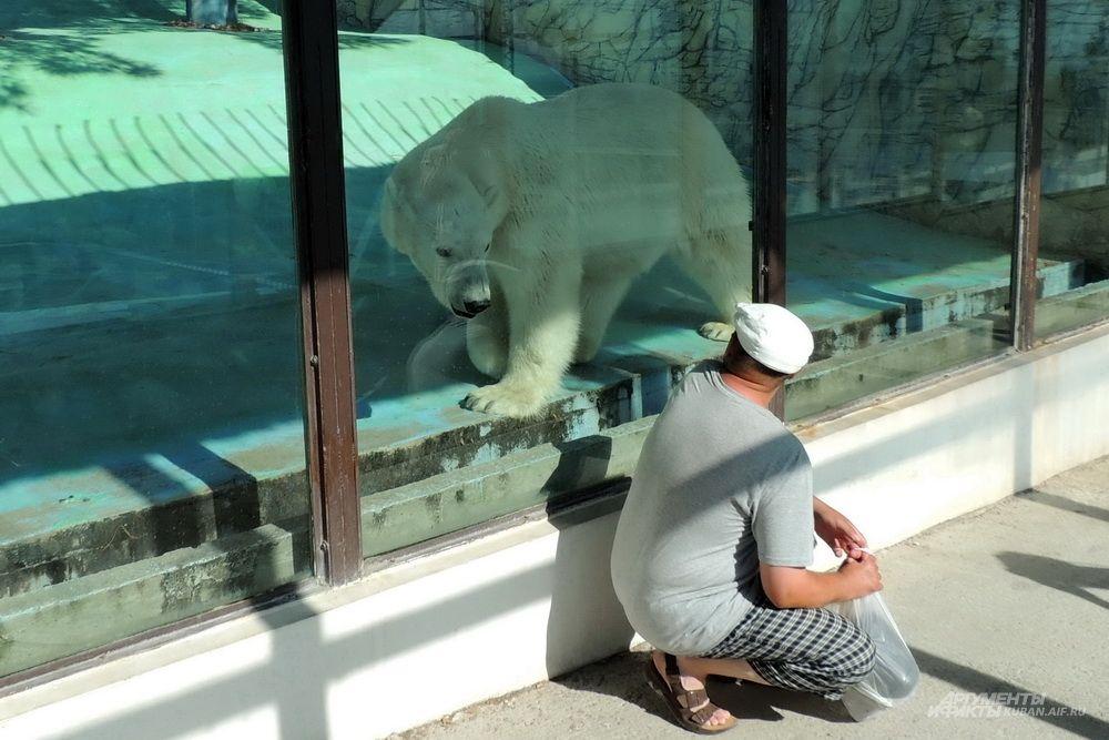 Даже через стекло на белого медведя не взглянешь без трепета.