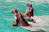 Выдрессировать дельфина невозможно, он сам решает: радовать публику или нет.