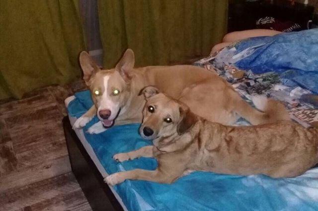 Собак планируют переправить в Читу.