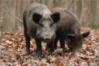 Животные могут оказаться на грани исчезновения.