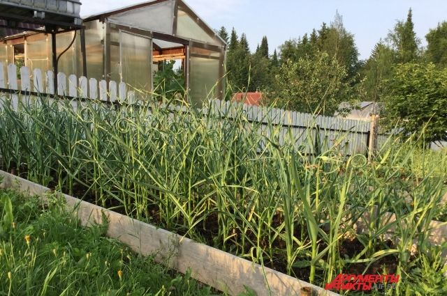 В первую декаду сентября можно приступать к уборке теплолюбивых растений из открытого грунта.