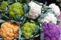 Цветная капуста богаче белокочанной по содержанию белков в 1,5-2 раза