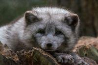 Ямальские ученые подводят итоги полевого сезона в «Еркуте» и «Сабетте»