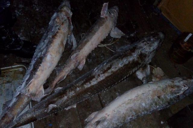 У продавца изъяли свыше 700 кг замороженной рыбы.