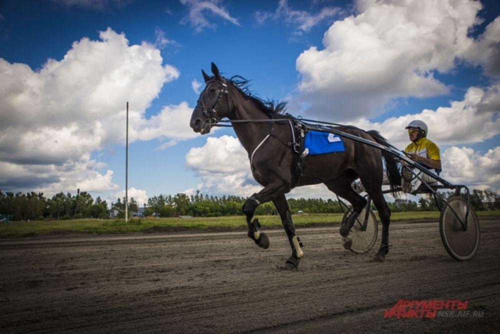 На соревнованиях участвовали более 70 лошадей русской рысистой, орловской и американской стандартбредной пород, 30 лошадей из других регионов и 40 лошадей из Новосибирской области.