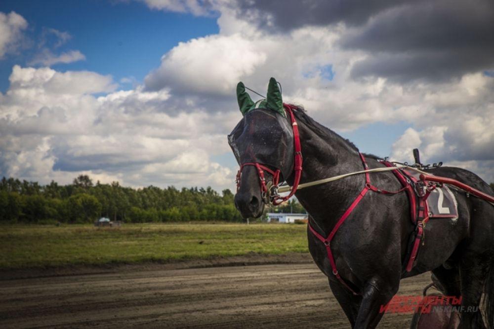 Во время состязаний были представлены лошади разных пород и из разных городов региона и страны.