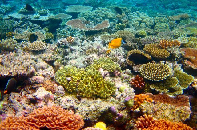 У берегов Крыма предложили создать искусственные рифы - Real estate