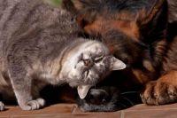 В Раде предложили штрафовать владельцев незарегистрированных кошек и собак