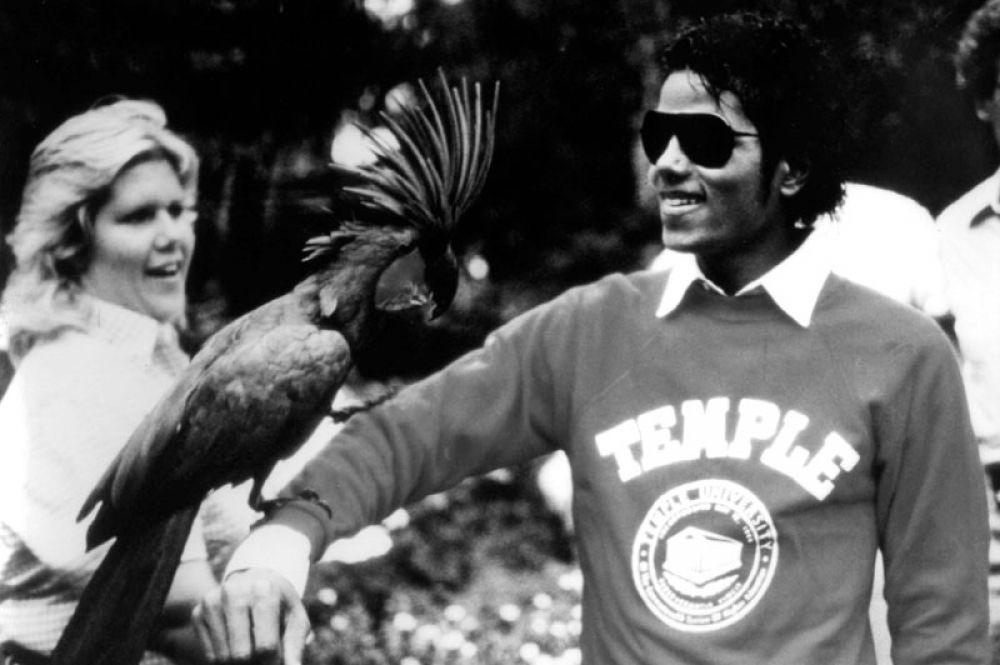 Майкл Джексон держит королевского синего какаду в развлекательном центре «Дисней Уорлд» во Флориде. 1982 год.