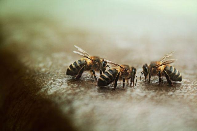 Тысячи пчел атаковали палатку с хот-догами на Манхэттене - Real estate