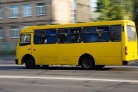 В Бердичеве водитель избил пенсионерку: полиция озвучила иную версию