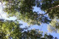 Охотник выяснил, что одному из заблудившихся  40 лет, другому 63 года. Они работали в лесу в районе Завожика. Днём решили пойти в Добрянку пешком через лес, чтобы по пути набрать грибов, и заплутали.
