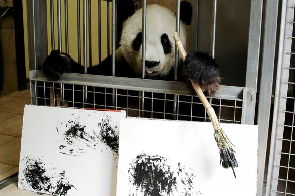 Гигантская панда по кличке Ян-Ян с картинами, которые она нарисовала, в Шёнбруннском зоопарке в Вене, Австрия. Сто ее работ будут продаваться онлайн по 490 евро за штуку, доходы от продаж пойдут на финансирование иллюстрированной книги о пандах в Венском зоопарке.