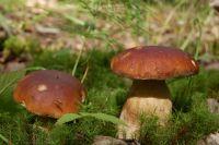 Разные грибы нужно обрабатывать по-разному.