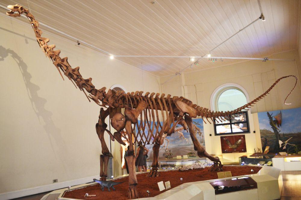 Реконструкция скелета динозавра.