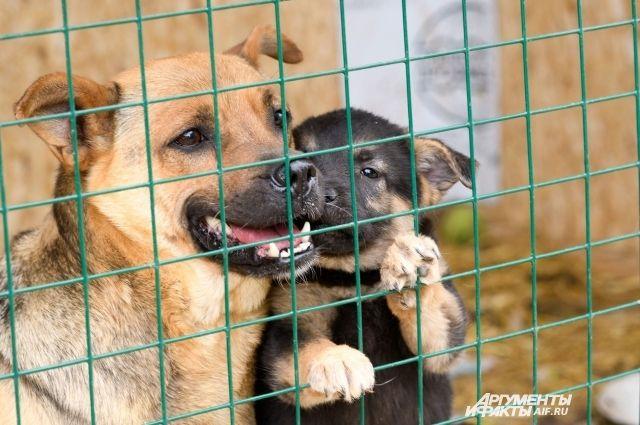 Оренбургский приют для бездомных животных закрыт на карантин.