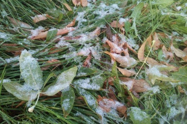 Заморозки типичны для сентября.