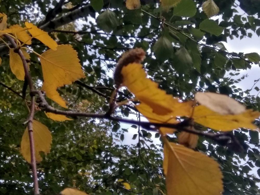 Пожелтела листва.