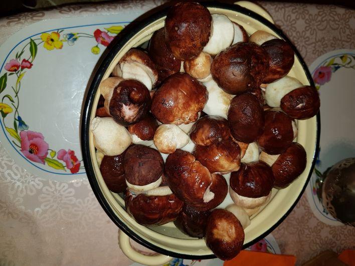 Молодые белые грибы в Тюмени.