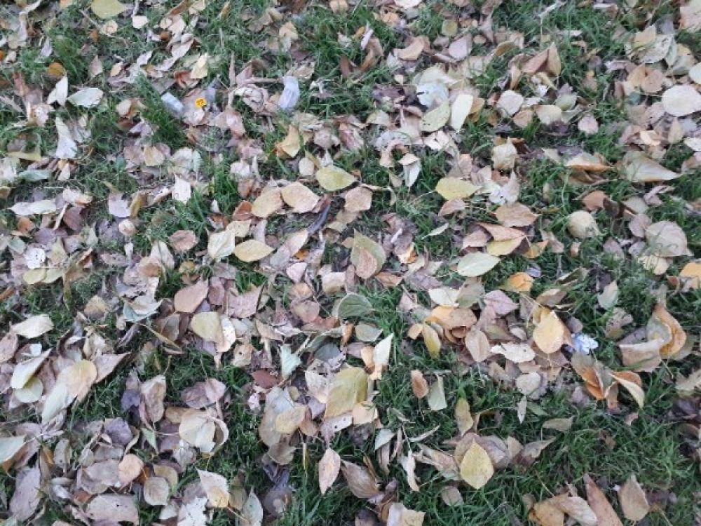 Желтые листья в парке напоминают о том, что лето прошло.