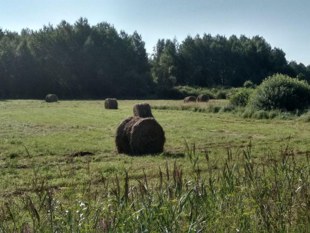 Тюки сена на покосе - зимой коровам будет чем подкрепиться.